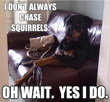 Chase squirrels