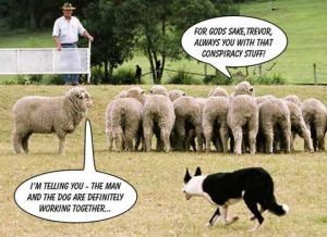 Conspiracy sheep